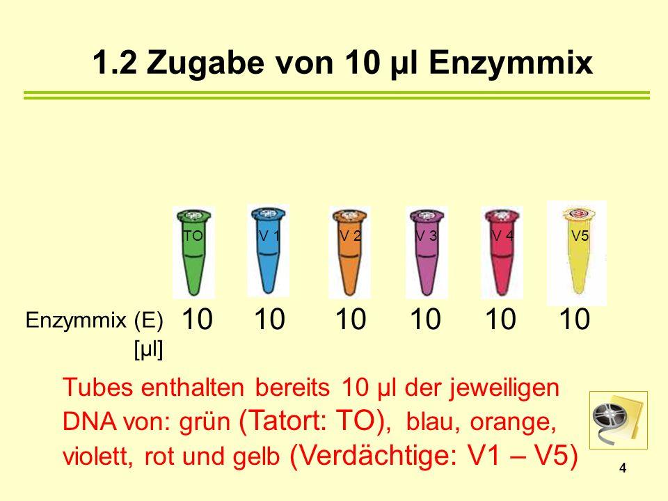 1.2 Zugabe von 10 µl Enzymmix Enzymmix (E) [µl] 10 10 10 10 10 10